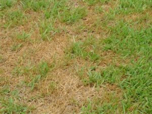 brown spots in grass are due to lawn sprinkler in need of repair