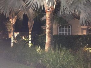 landscape lighting on 3 palm trees at night